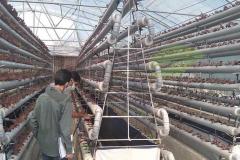 مشاوره به گلخانه ان اف تی هیدروپونیک