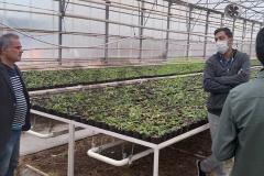مشاوره به گلخانه کشت خاکی
