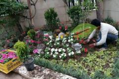 خدمات کاشت گل و گیاه