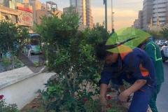 کاشت گل توسط نیروی مجرب