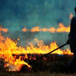 سوزاندن بقایای گیاهی