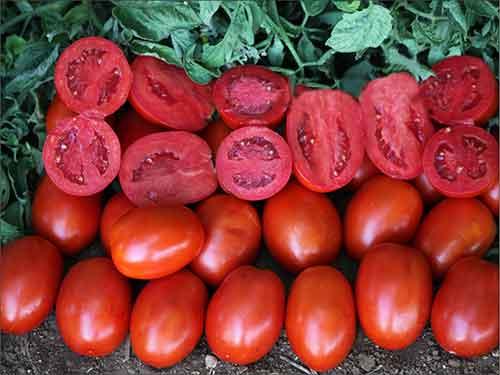 نشاء گوجه فرنگی