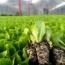 سیستم های تولید نشاء گلخانه ای