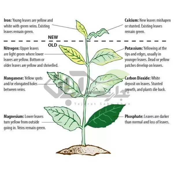 تغدیه گیاهی ( کمبود عناصر غذایی )