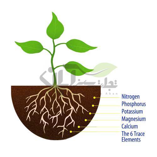 عناصر ضروری در گیاهان