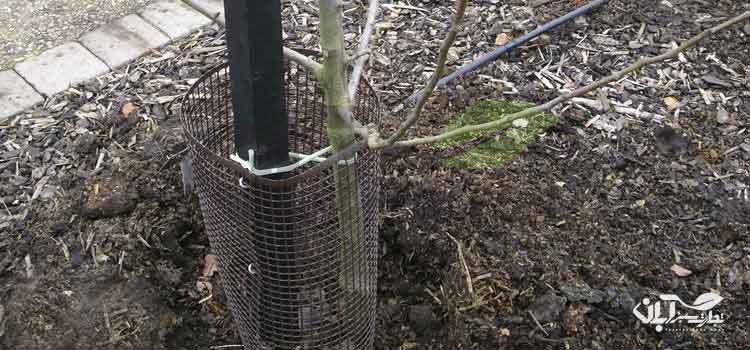 استفاده از کود دامی در باغ
