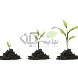 رشد سریع گیاهان