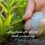 کود های شیمیایی و آلی مورد استفاده در گلخانه