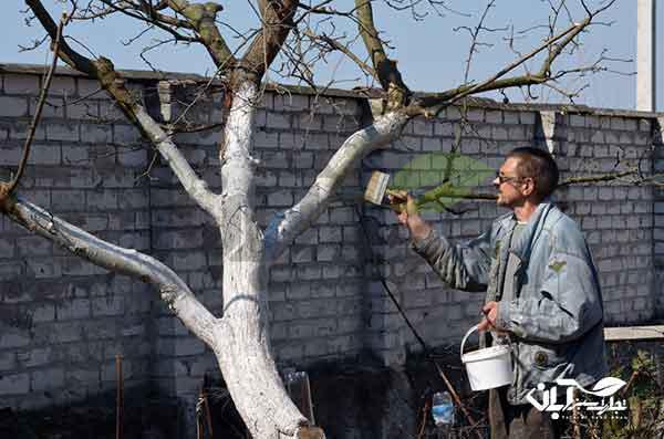 محافظت از تنه درخت