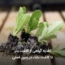 تغذیه گیاهی از کاشت بذر تا کاشت نشاء در زمین اصلی