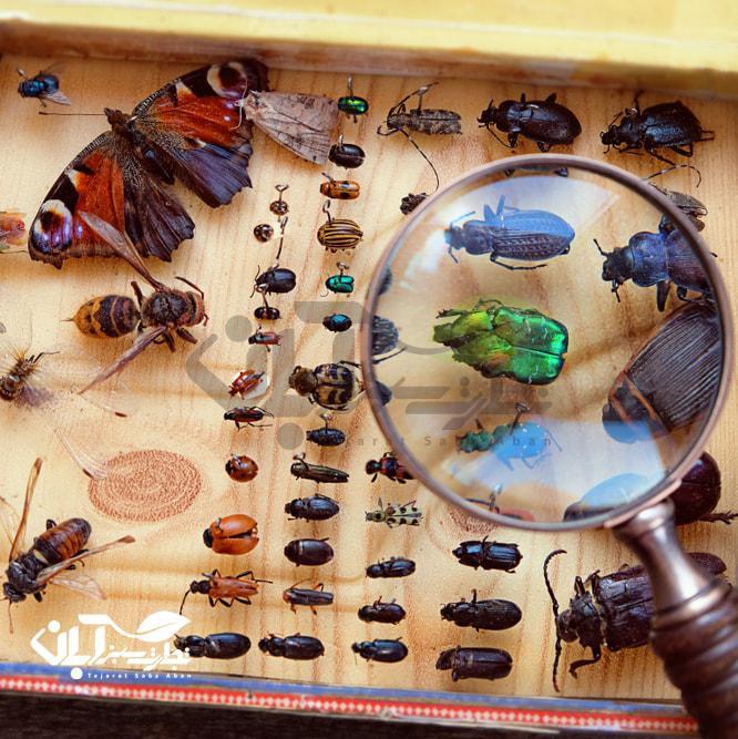 حشرات مفید