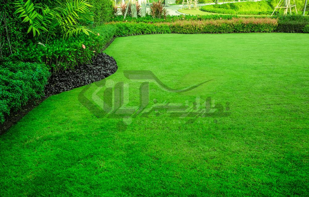 فضای سبز گیاهان پوششی
