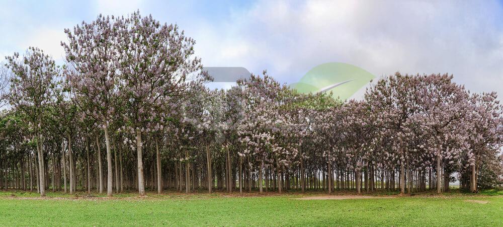 مزرعه پالونیا