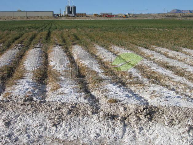 نفوذ و تجمع شوری به خاک مزرعه