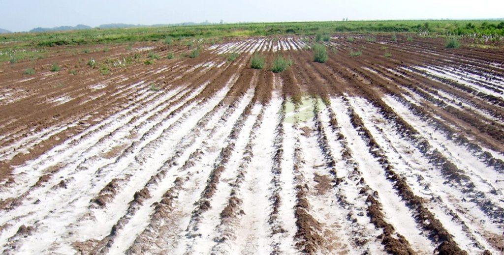 مزرعه با خاک شور بدون کشت گیاه