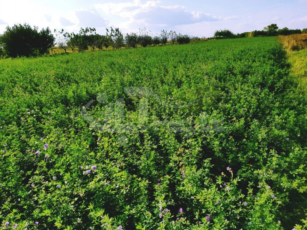مزرعه یونجه