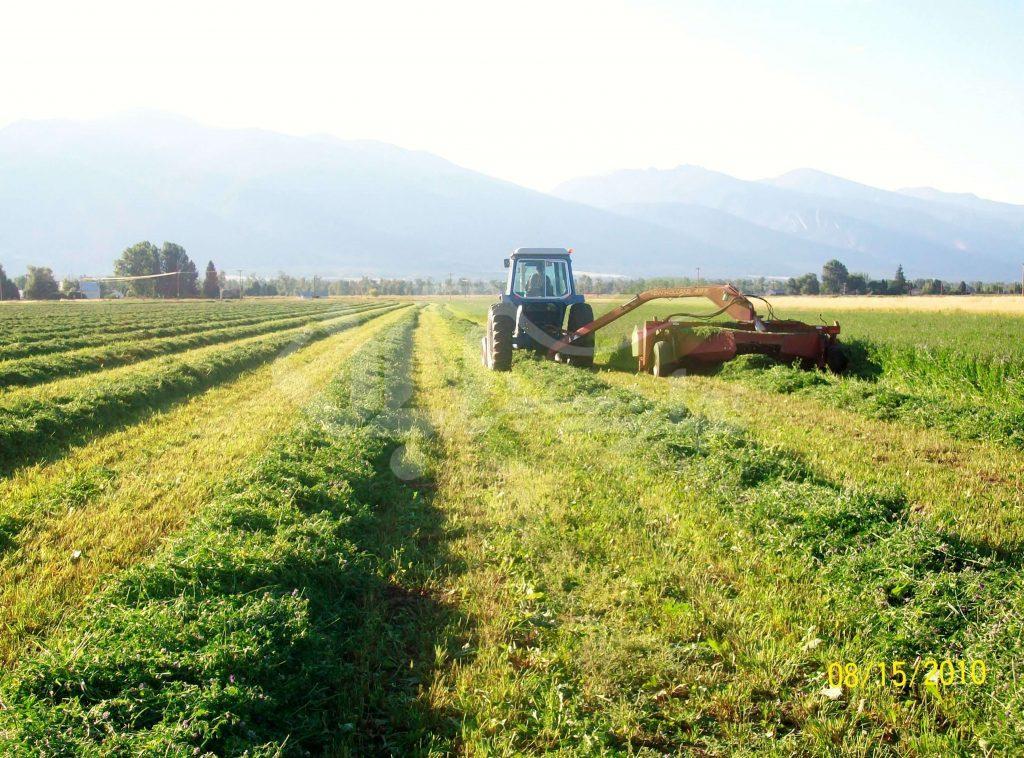 برداشت یونجه اتوماتیک با ماشین کشاورزی