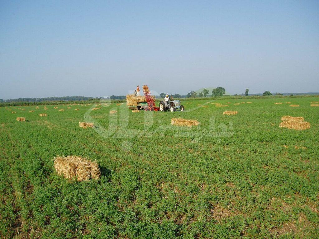 برداشت مکانیزه یونجه در مزرعه