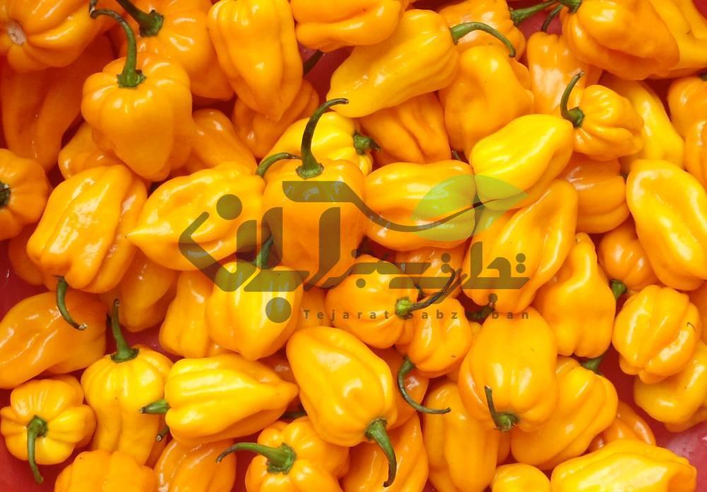 بذر Capsicum chinense