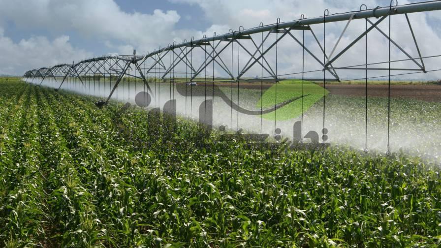 آبیاری بارانی مزرعه ذرت توسط دستگاه