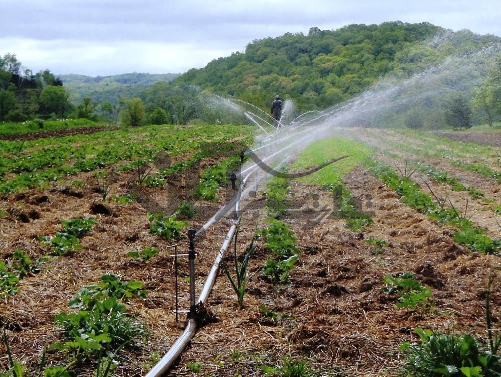 آبیاری بارانی مزرعه فلفل