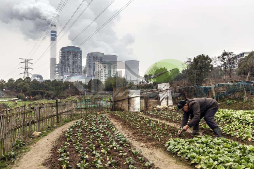 تاثیر آلودگی هوا بر روی محصولات کشاورزی
