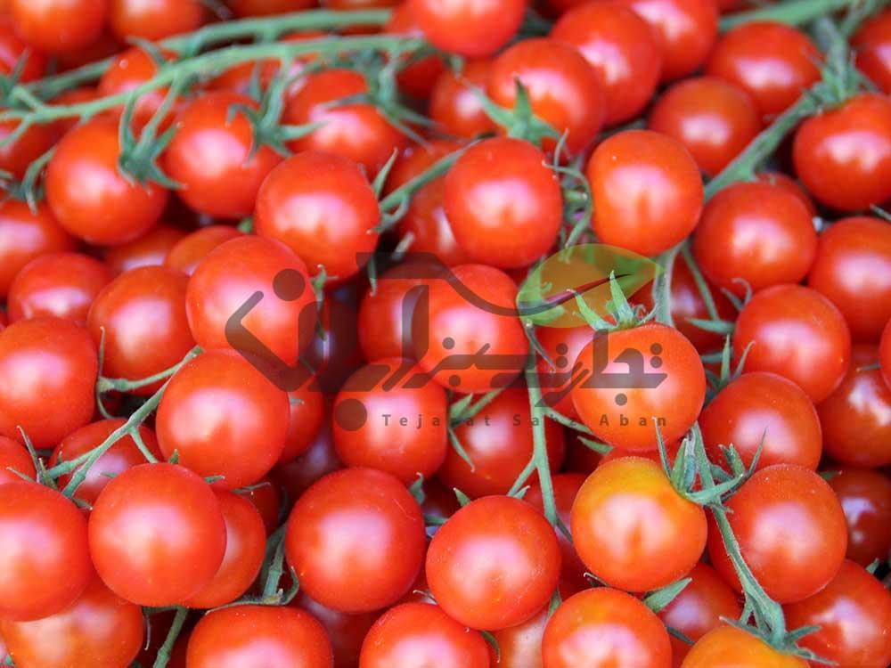 گوجه فرنگی خوشه ای