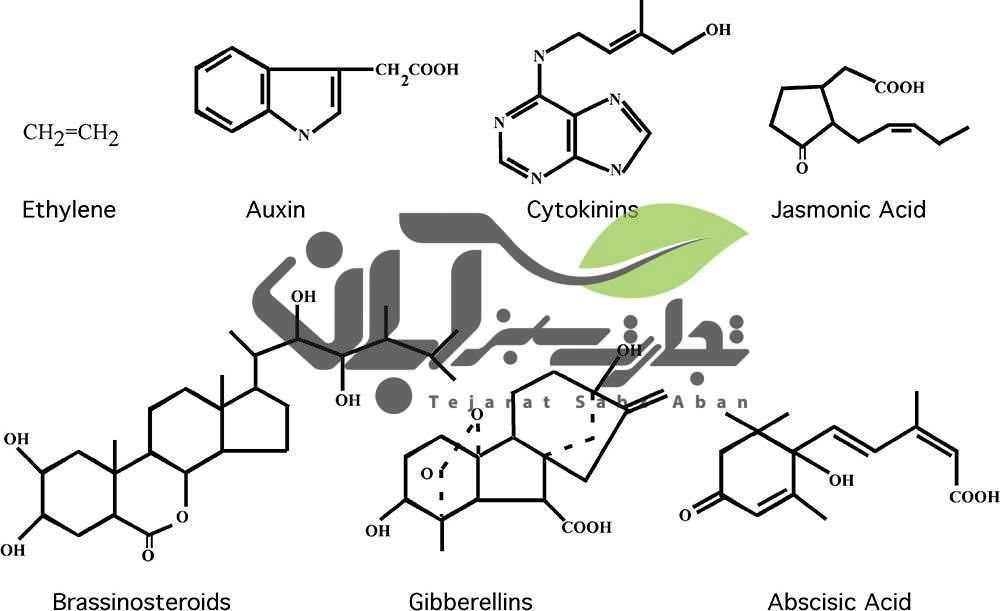 فرمول شیمیایی هورمون های گیاهی