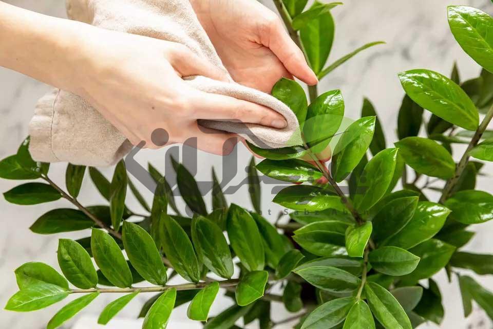 پاکسازی برگ گیاهان