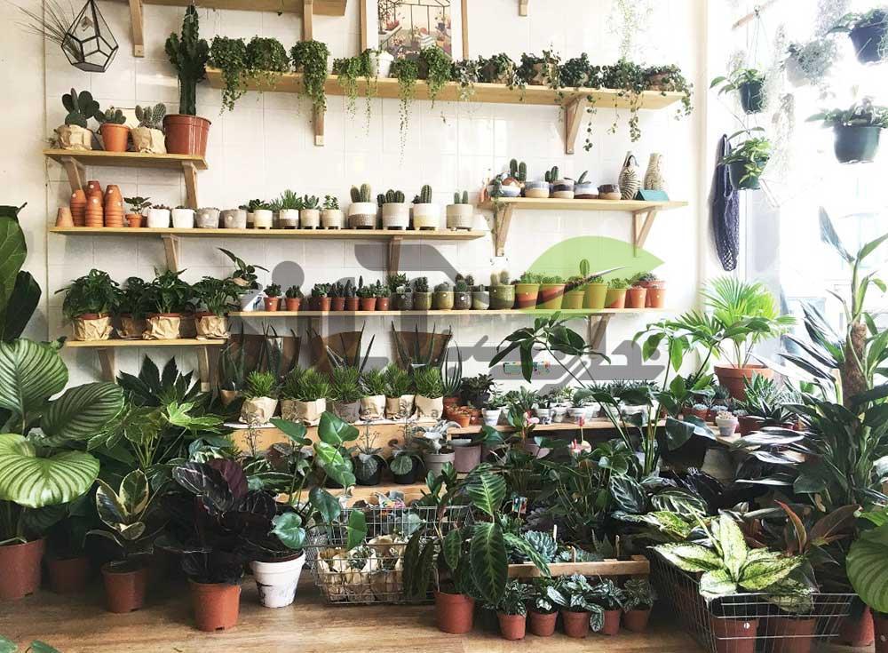 نکات نگهداری گل و گیاهان آپارتمانی