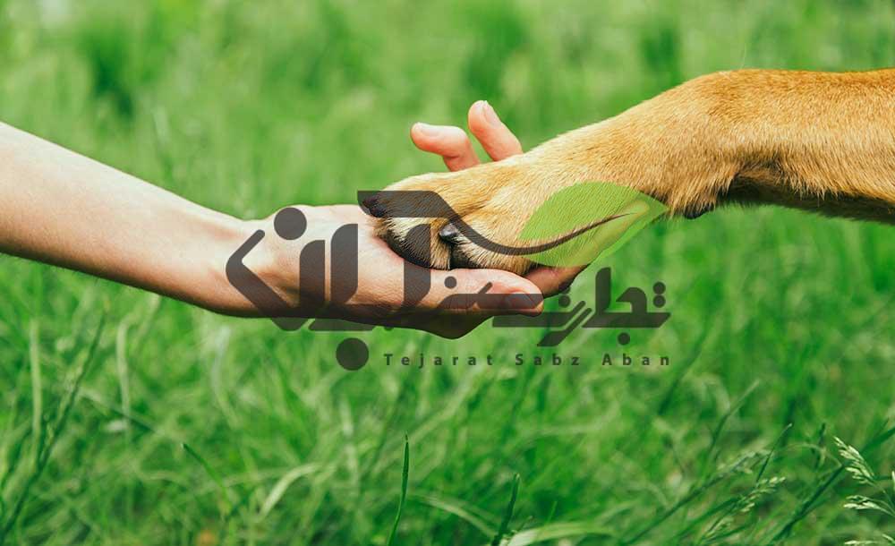 ارتباط انسان با حیوانات