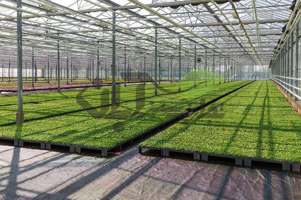 سیستم های تولید نشاء گلخانه ای مکانیزه و مدرن