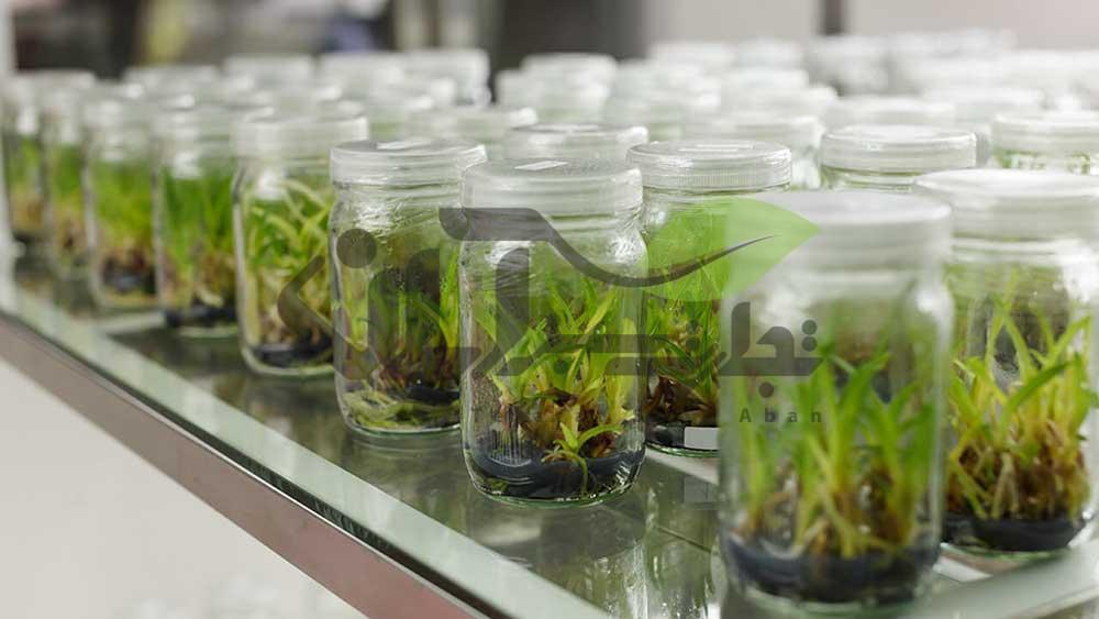 کشت بافت گیاهان