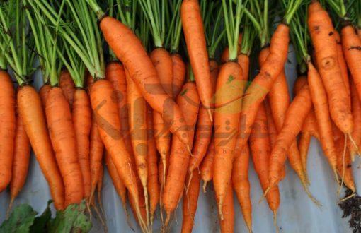 میوه هویج