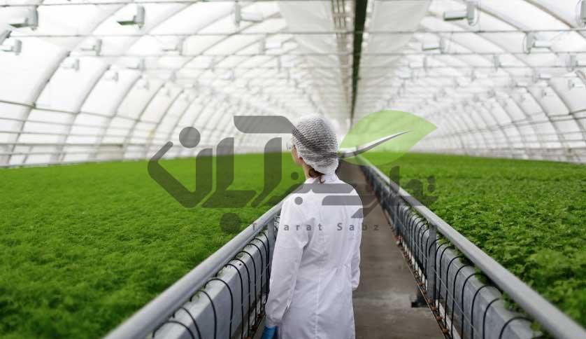 رعایت بهداشت در محیط گلخانه