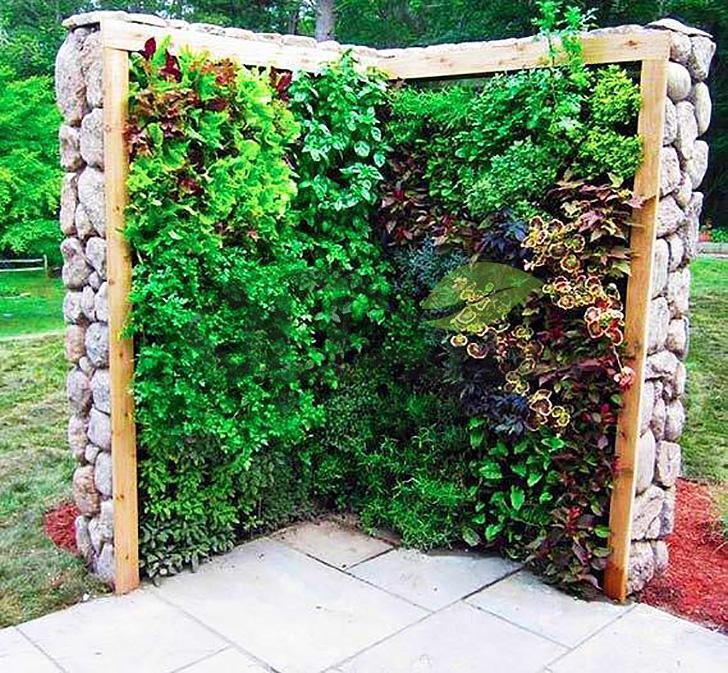 گیاهان متقارن بروی دیوار سبز