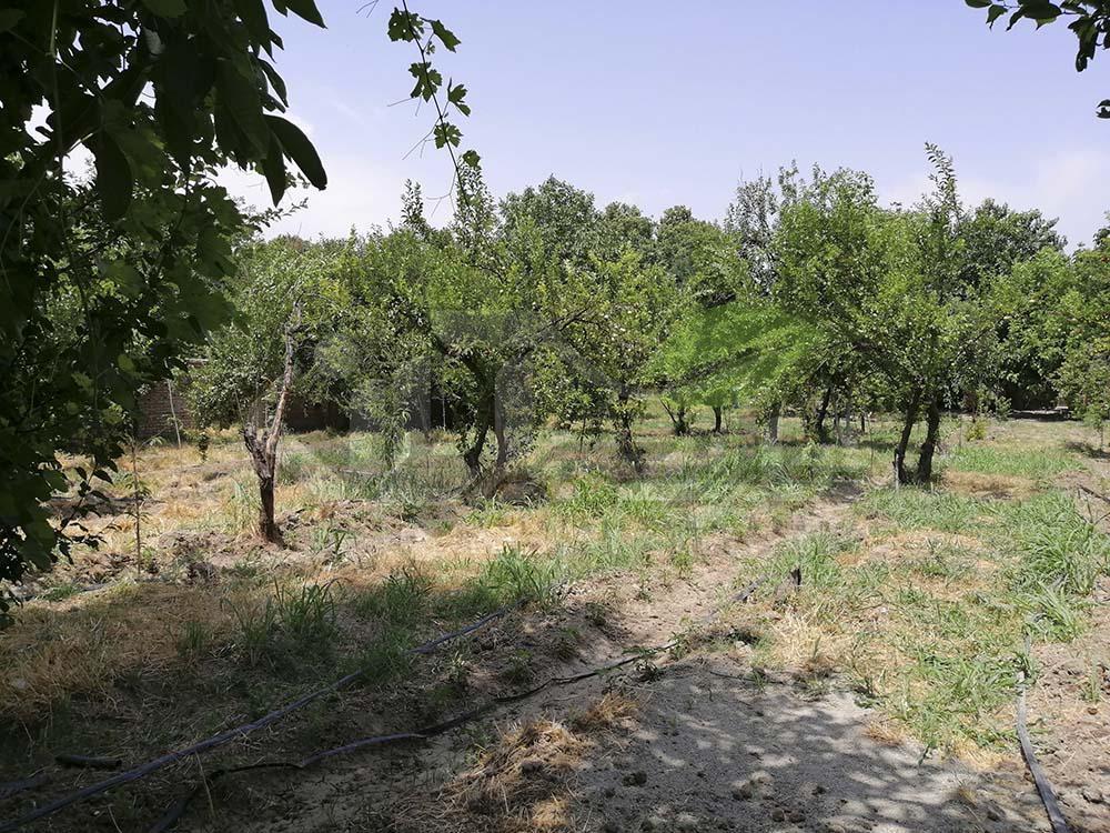 باغ میوه