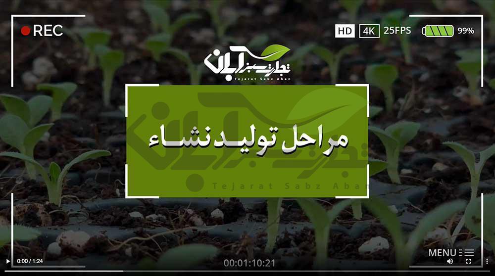 فیلم مراحل تولید نشاء گلخانهای