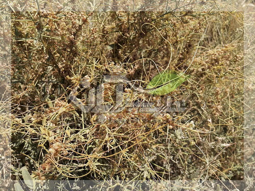 جلوگیری از علف هرز در زمین کشاورزی