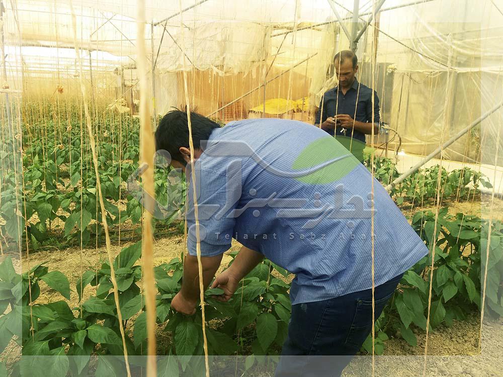 بازدید گیاه پزشکی گلخانه