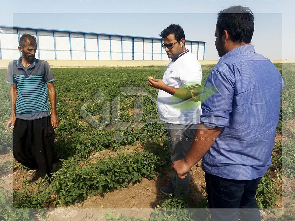 بازدید از مزرعه صیفیجات