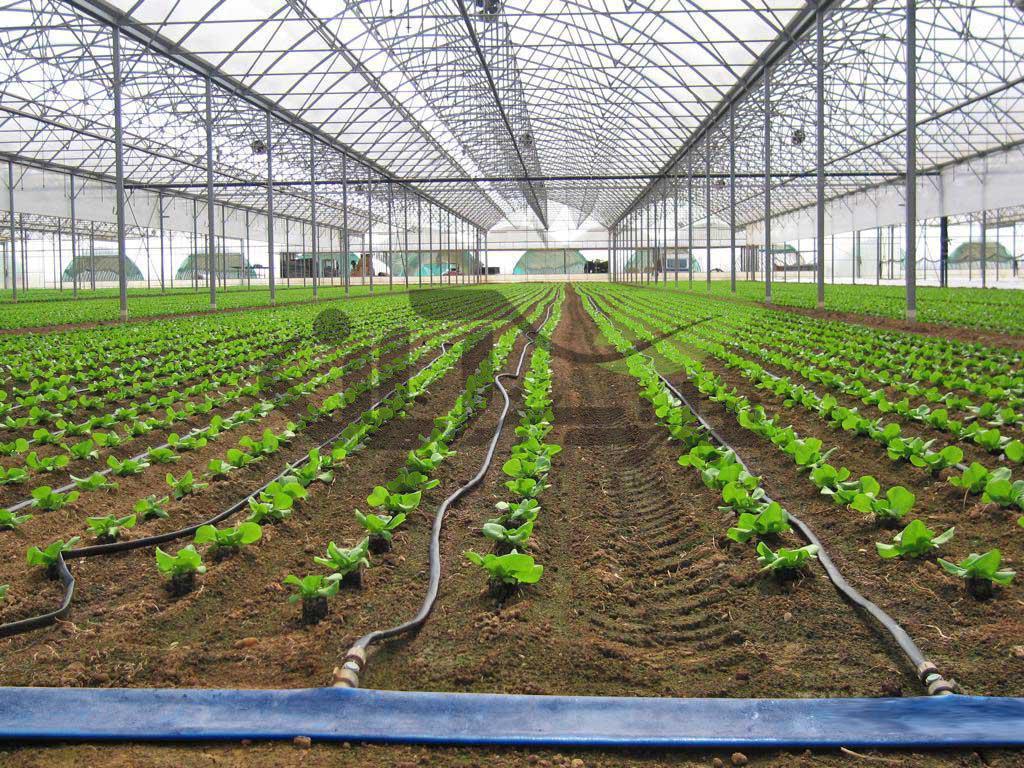 آبیاری قطرهای در گلخانه
