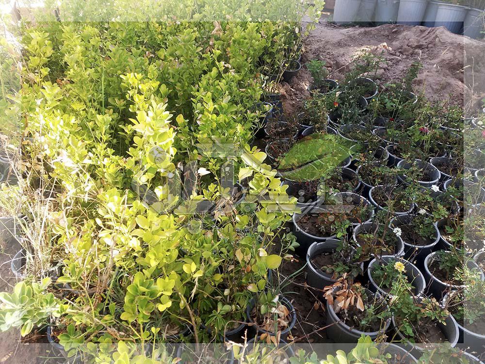 بازدید از گیاهان فضای سبز