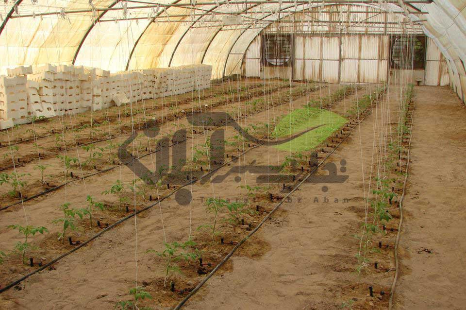 آبیاری قطره ای در کشت گلخانه ای