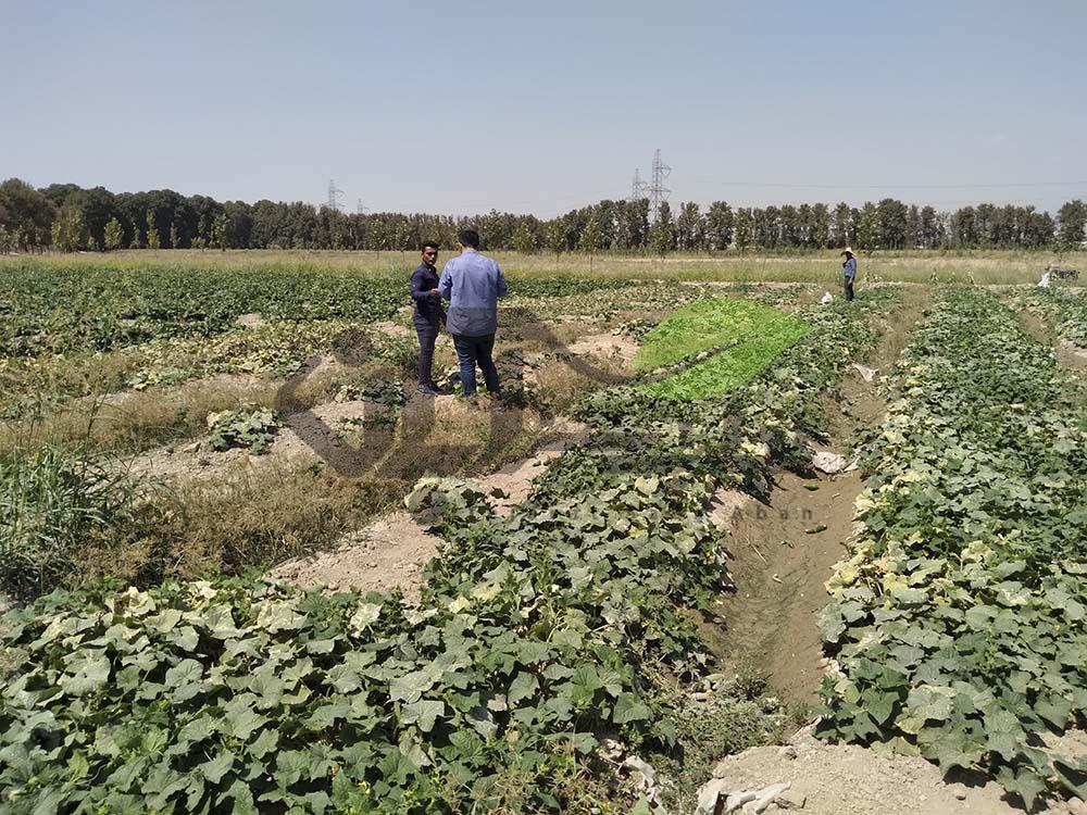 بازدید از مزرعه خیار
