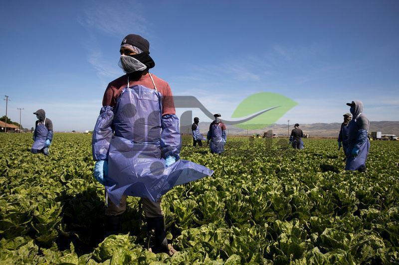 اثرات کرونا بر محصولات کشاورزی