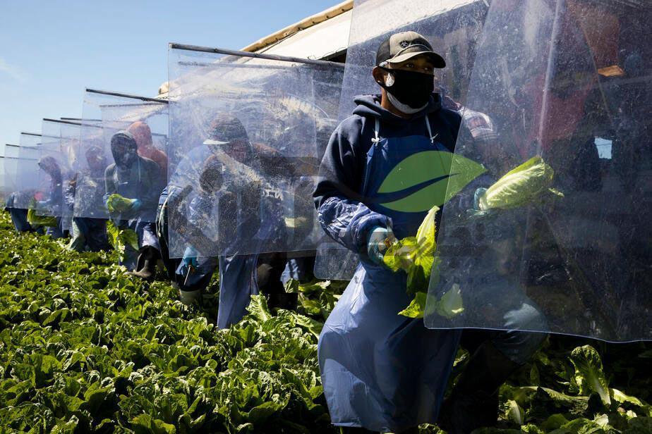آثار کرونا بر محصولات کشاورزی