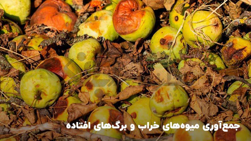 جمع اوری میوه های خراب و برگ های افتاده