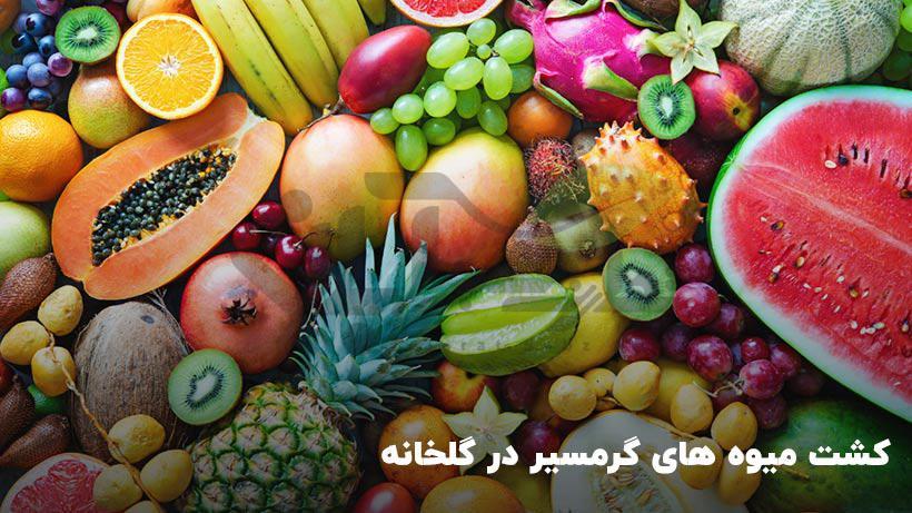 چگونه میوه های گرمسیری را در گلخانه پرورش دهیم؟