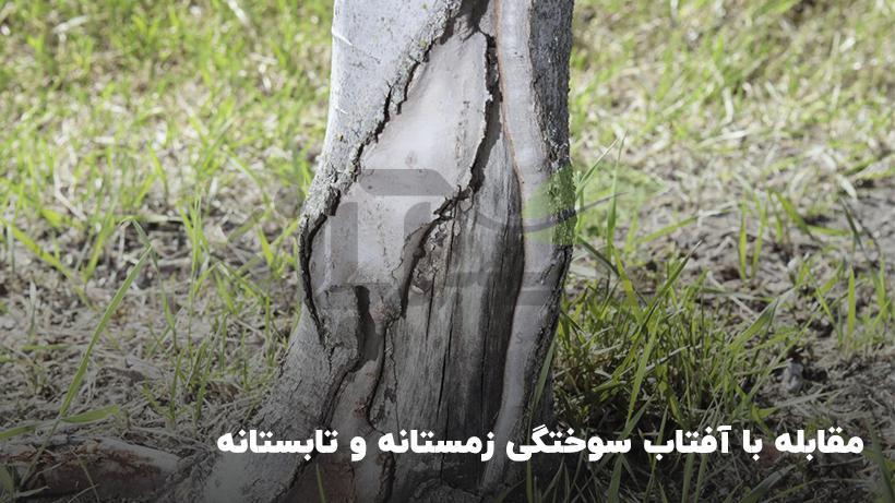 علائم سوختگی درختان در زمستان و تابستان